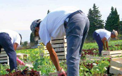 Le guide FGTA-FO des droits du salarié de la production agricole 2021 est disponible